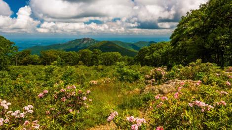 Louro-da-montanha emoldurando uma vista fantástica do Shenandoah National Park