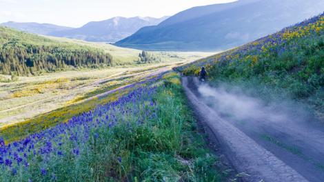 Flores coloridas ao longo de uma estrada no Gunnison Valley perto de Crested Butte