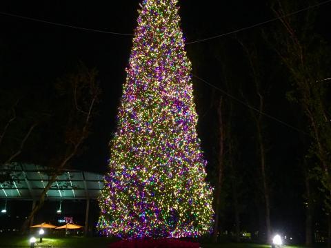 Árvore de Natal iluminada no Town Center Park (Parque central da cidade)