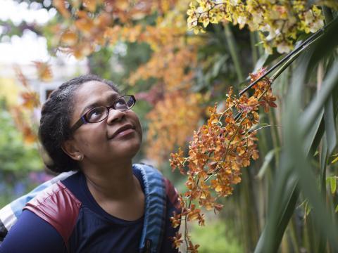 Admirando as orquídeas no Chicago Botanic Garden (Jardim Botânico de Chicago)