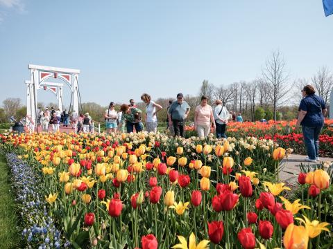 Um caminho pavimentado com botões brilhantes no Tulip Time (Festival de tulipas)