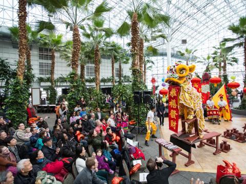 Comemoração do Festival das Lanternas para o ano novo chinês no Navy Peir