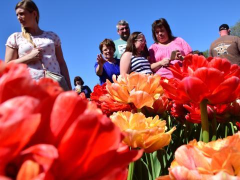 Visitantes observando as flores coloridas durante o Albany Tulip Festival