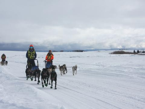 Competidores na corrida de trenó American Derby Dog, em Idaho